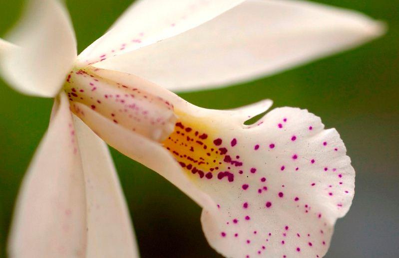 Miami Beach Botanical Gardens Orchids Miami Beach Gardens